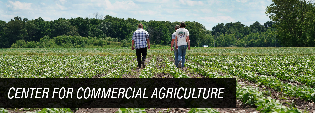 three men walking through soybean field